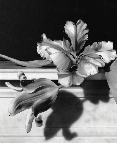 Horst P. Horst, 'Tulips, Oyster Bay, Long Island', 1989