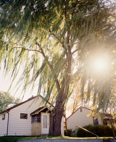 Gregory Halpern, 'Omaha, NE (Sun Through Willows)', 2005-2018