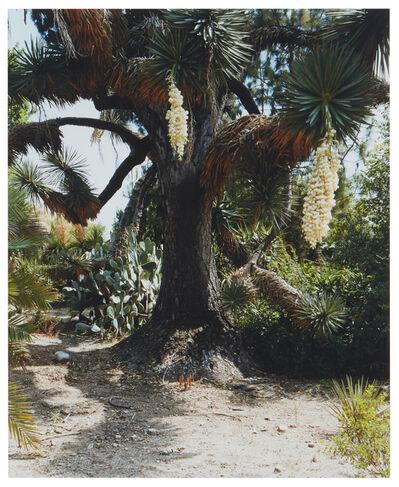 Scott McFarland, 'Yucca Filfera', 2005