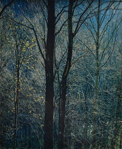 Eliot Porter, 'Great Smoky Mountains National Park', 1968