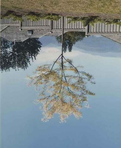 Rodney Graham, 'Tree on the former site of Camera Obscura', 1996-98