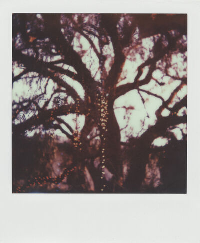 Stuart Sandford, 'The trees are full of fairy lights', 2014