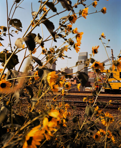 Gregory Halpern, 'Omaha, NE (Downtown Through Sunflowers)', 2005-2018