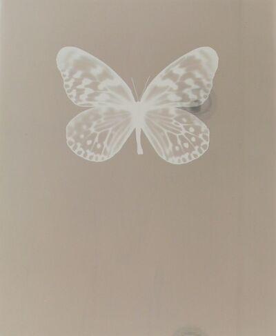 Adam Fuss, 'Untitled, 2009', 2009