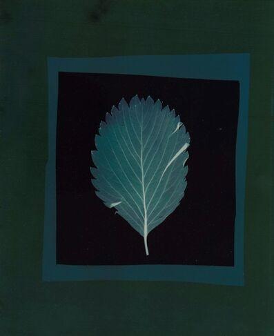 Nino Migliori, 'Da Herbarium', 1974