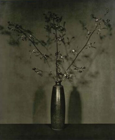 Robert Mapplethorpe, 'Flowers', 1984
