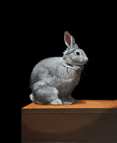 Patricia Traub, 'Standard Chinchilla Rabbit', 2020