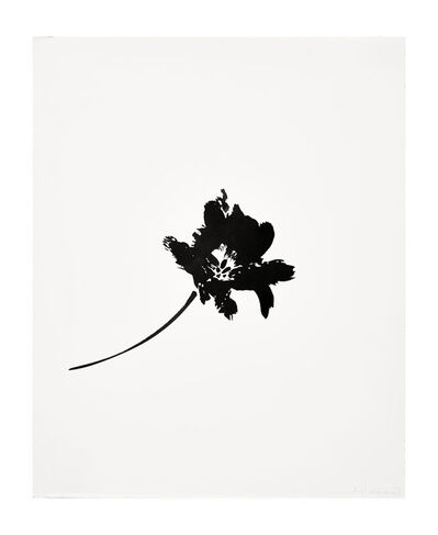 Veronique Gambier, 'Ink Study - Fringed Tulip 3', 2017