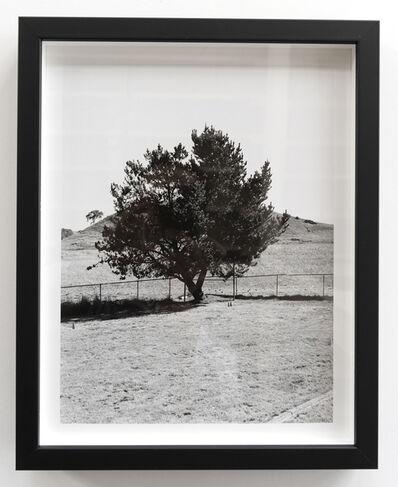 Alice Shaw, 'Tree #2', 2019