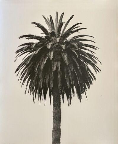 Robert Stivers, 'Palm 3', 2019