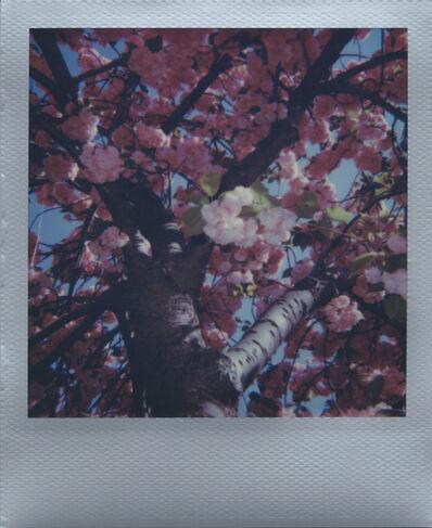 """Ellen Stagg, ' """"Cherry Blossoms 3""""', 2018"""