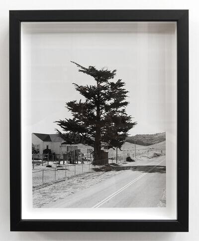 Alice Shaw, 'Tree #1', 2019