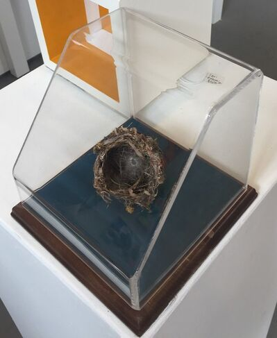 Rachel Muldez, 'Van Allan's Nest', 2016