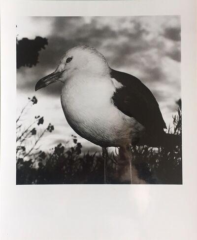 Issei Suda, '民謡山河 青森 八户', 1978