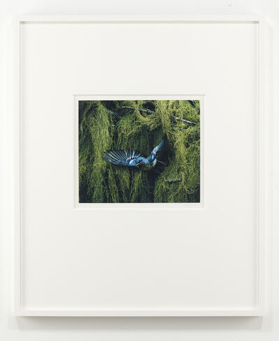 Eliot Porter, 'Parula Warbler, Parula Americana, Great Spruce Head Island, Maine', 1968