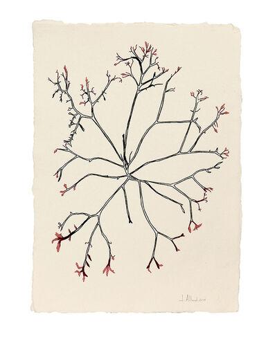 Johanne Allard, 'Seaweed', 2014