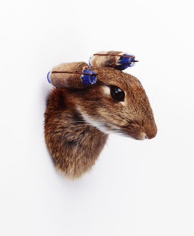 Nancy Fouts, 'Rabbit with Curlers', 2010