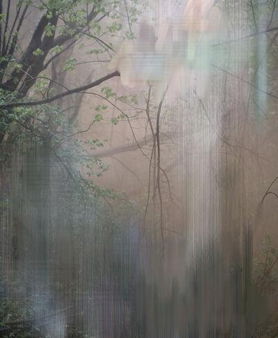 Sandra Kantanen, 'Untitled (Forest 6)', 2017
