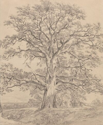 John Constable, 'A Great Oak Tree', ca. 1801