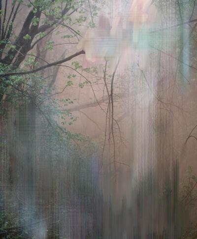 Sandra Kantanen, 'Forest 6', 2017