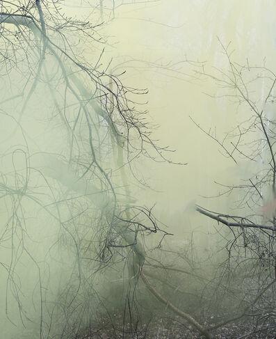 Sandra Kantanen, 'Untitled (Forest 3)', 2016