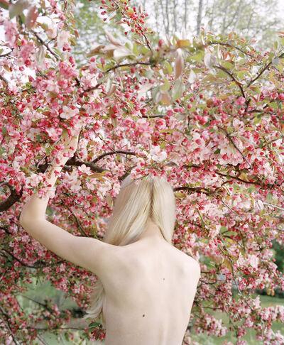 Jocelyn Lee, 'Raising the Cherry Tree', 2016
