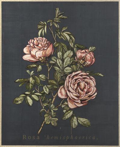 Jacques Payette, 'Rosa hemisphaerica', 2018