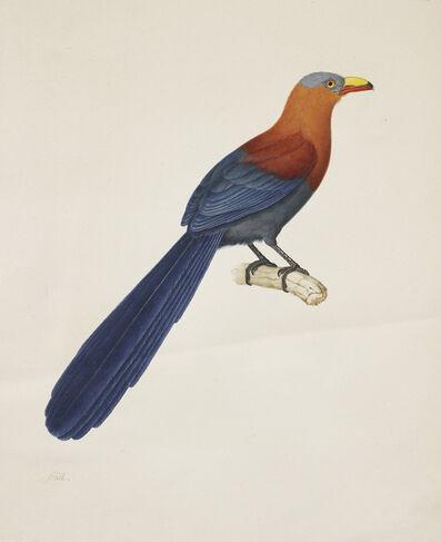Nicolas Huet, 'Phoenicophaeus Calorhyn', ca. 1800