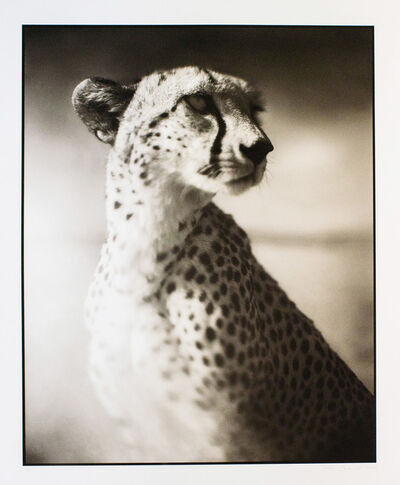 Nick Brandt, 'Portrait of Cheetah Against Dark Sky - Maasai Mara (from On This Earth Portfolio)', 2004