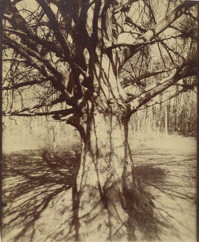 Eugène Atget, 'Arbre (Garche) Hˆtre', 1910-1915