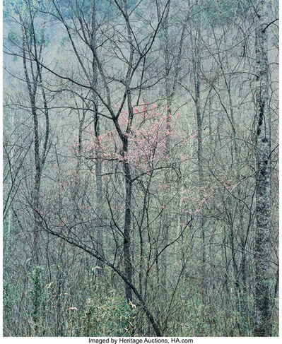 Eliot Porter, 'Intimate Landscapes (four photographs)', 1957-1977