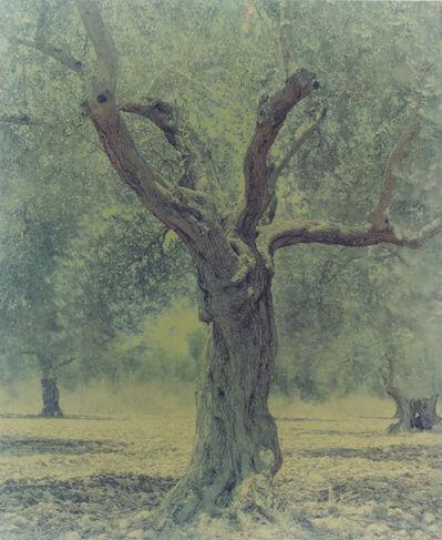 Ori Gersht, 'Olive 21', 2003