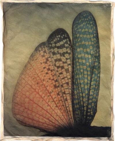 Gregor Törzs, 'à la couleur – Wing Wing 1', 2016