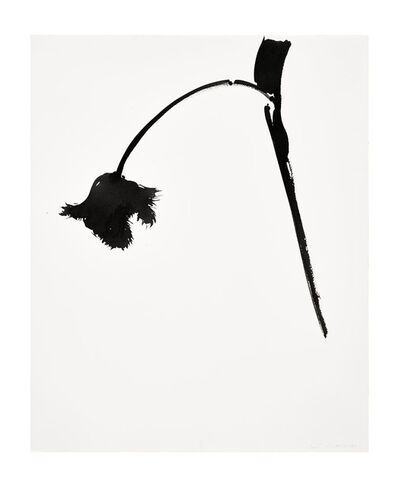 Veronique Gambier, 'Ink Study - Fringed Tulip 1', 2017