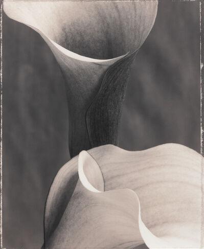 Ron van Dongen, 'Zanedeschia 'Neroli'', 1997