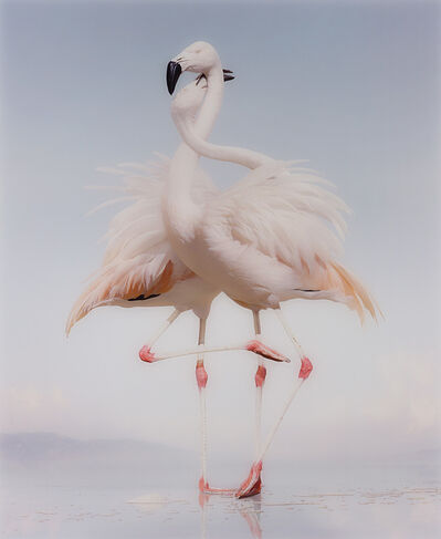 Simen Johan, 'Untitled #163 from Until the Kingdom Comes', 2011