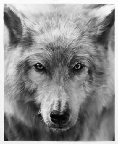 Robert Longo, 'Study of Arctic Wolf', 2019