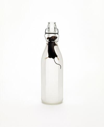 Nancy Fouts, 'Mouse Trap Bottle', 2010