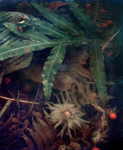 Jocelyn Lee, 'Dark Matter #8, Decomposing Dahlia', 2017