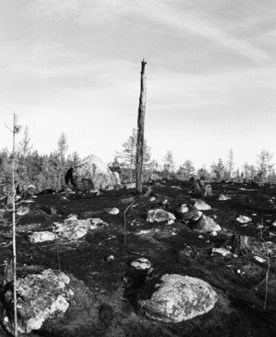 Inga Linn Härdelin, 'Träd Kan Falla Snabbt och Tyst', 2020