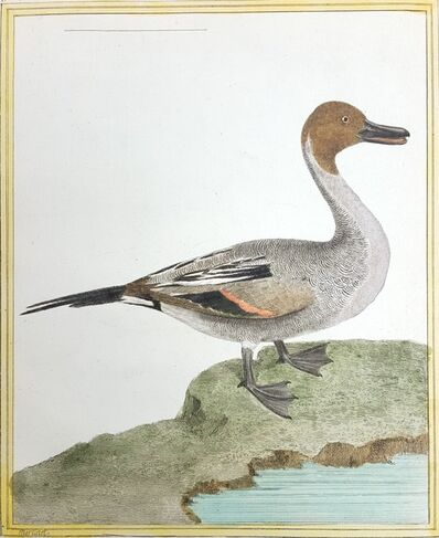 Francois-Nicolas Martinet, 'Le Canard a Longue Queue', ca. 1770