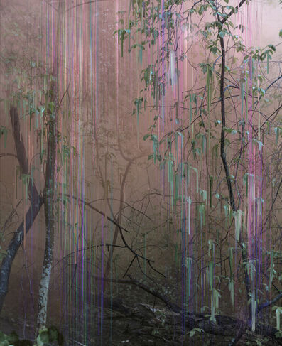 Sandra Kantanen, 'Untitled (Forest 19)', 2016