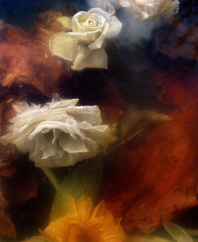 Jocelyn Lee, 'Dark Matter #13, Sinking Rose and Sunflower', 2017