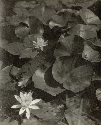 Dorothy Norman, 'Water Lilies', 1936/1936