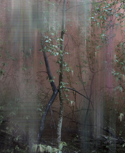 Sandra Kantanen, 'Forest 5', 2017