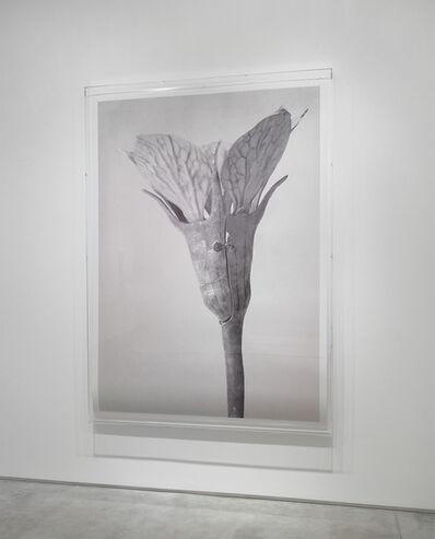 Linarejos Moreno, 'Art Forms in Mechanism XII', 2016