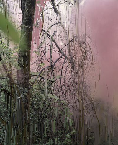 Sandra Kantanen, 'Untitled (Forest 14)', 2019