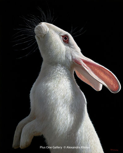 Alexandra Klimas, 'Snowy the Rabbit II', 2018