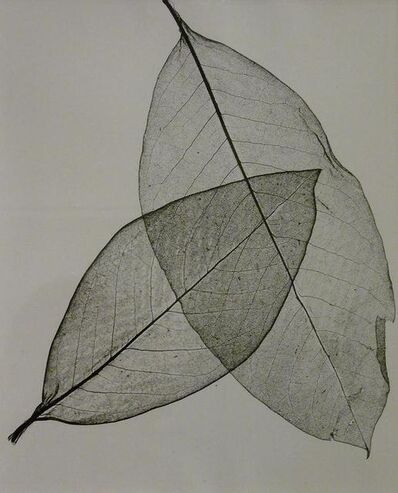 Herbert Matter, 'Two Transparent Leaves', 1945
