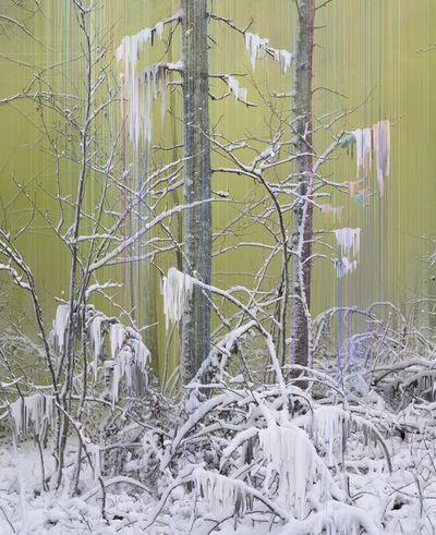 Sandra Kantanen, 'Forest 7 ', 2017